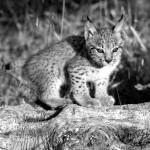 Parques Nacionales: La evolución disecada