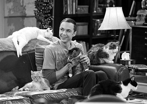 Sheldon Cooper: el friki que rescató una serie
