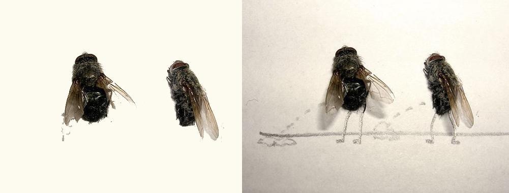 Realidad en bruto dos moscas muertas sin patas