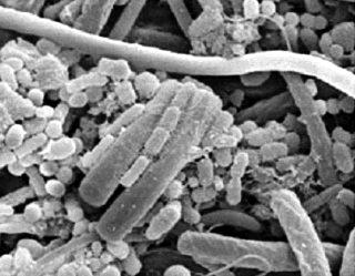 Microbioma intestinal, la importancia de un puñado de bacterias