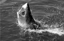 ¡Tiburón!