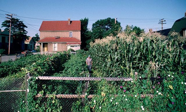 La pobreza y la proliferación de solares vacíos han generado el curioso fenómeno de la agricultura urbana.