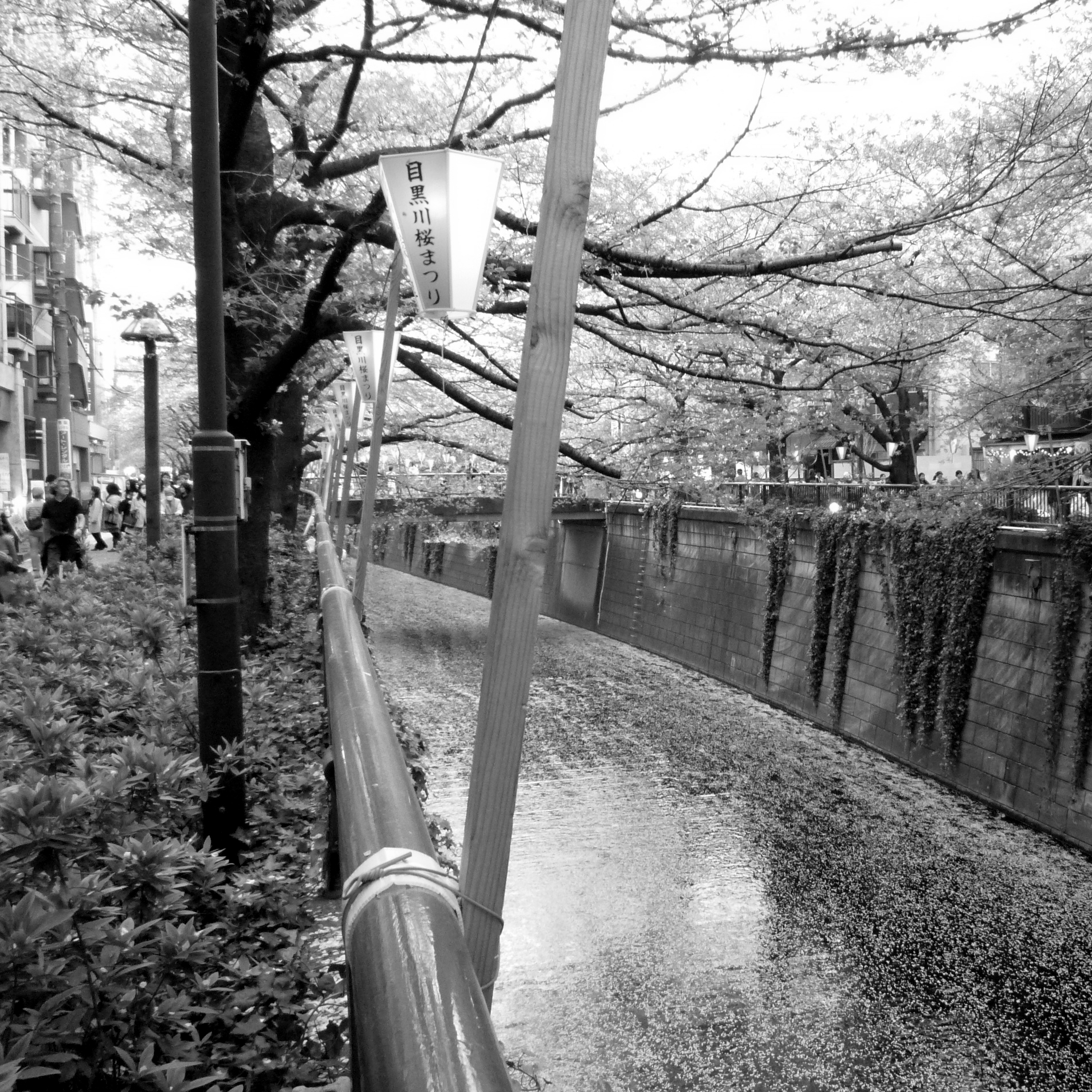 Tokyo: Nakameguro durante el sakura