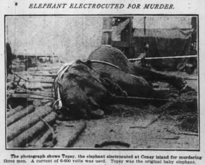 """""""Elefante electrocutado por homicidio"""", porque Edison hacía algo más aparte de fabricar bombillas."""