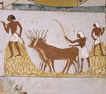 La granja, elemento básico del retorno al Nilo.