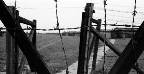 Los faisanes de Majdanek