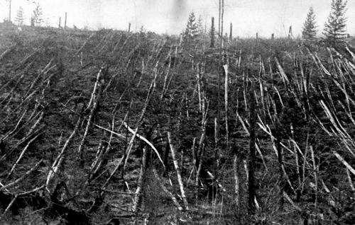 Los célebres efectos de la onda expansiva del meteoro de Tunguska: diez megatones de potencia.
