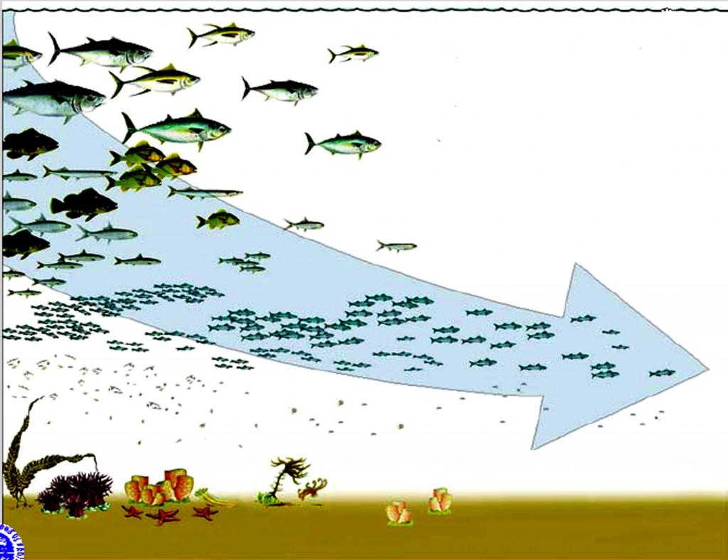 Hacia la banalización de los ecosistemas marinos; desaparecen los grandes depredadores y filtradores, así como los bosques animales y vegetales del fondo del mar.