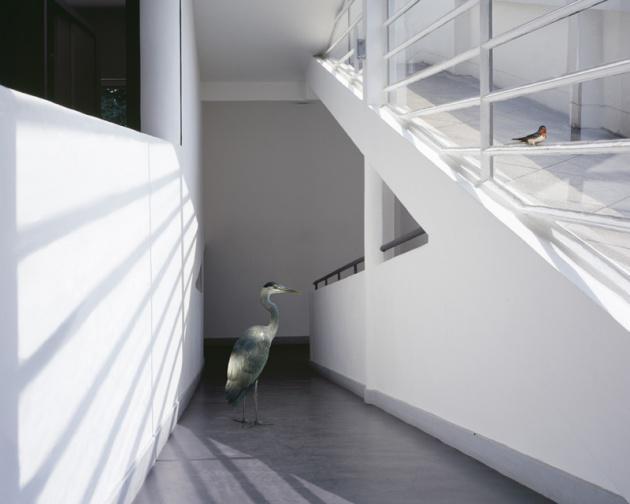 La rampa de Villa Saboya en una fotografía de Karen Knorr dentro de su serie Fábulas