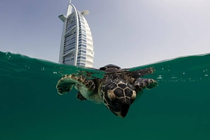 Hoy día las poblaciones de tortugas son un pálido reflejo de lo que fueron, entre otras cosas por la profunda transformación del hábitat.