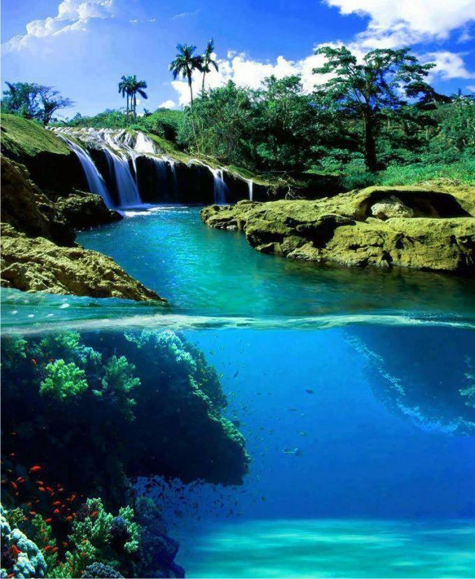 Tanto en tierra como bajo el mar, la naturaleza ha creado estructuras similares para acaparar espacio, luz (en caso de llegar, pues a gran profundidad se extingue) y alimento. (Fuente: Photography https://www.facebook.com/FFotograf )