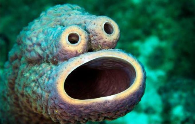 Esponja con cara sorprendida. (Foto: Amazing underwater