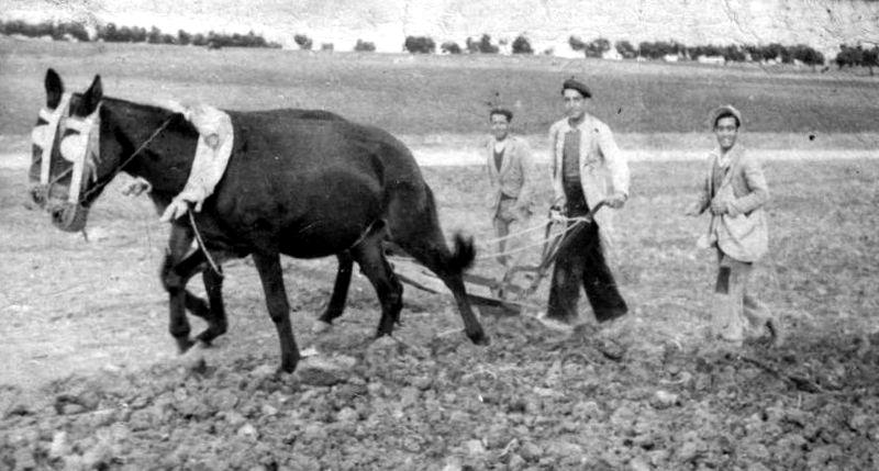 Imagen de arado en 1950 en El Saucejo, provincia de Sevilla. Foto Malojavio el Saucejo (CC)