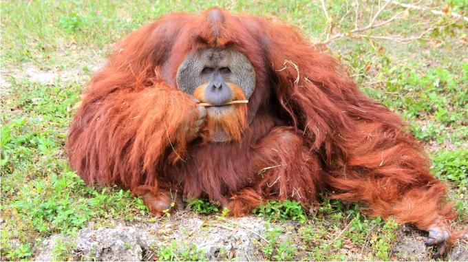 No son los bosques de Kashyyyk, sino de Sumatra. Foto de Cuatrok77 (CC)