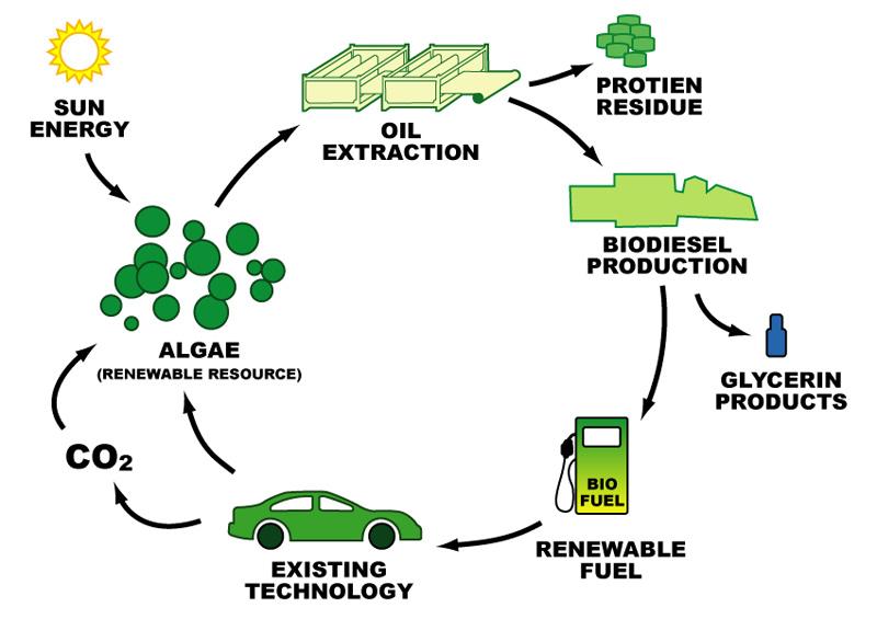 FOTO 1 ciclo biodiesel