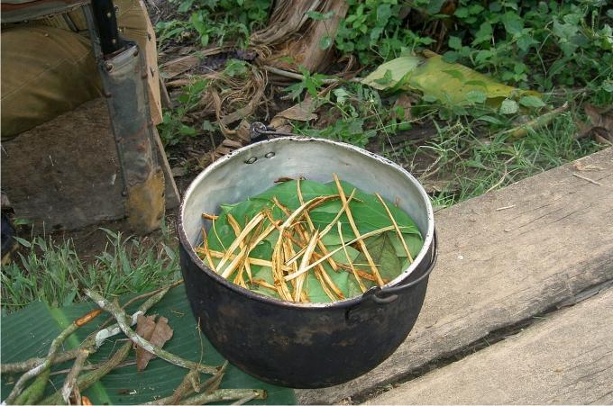 Cocinando ayahuasca y chacruna. Foto: Terpsichore (CC)