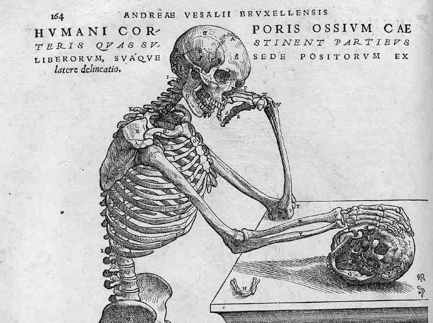 Figura 0 Vesalius_De corporis humani fabrica_Pg_164_NIH_ detalle