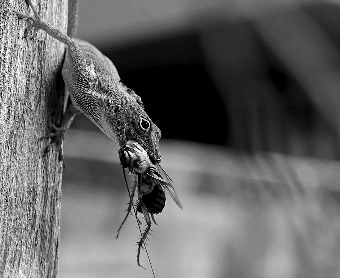 Dela vida de las cucarachas. Un tratado entomológico-apocalíptico sobre los bichos negros que heredarán el mundo