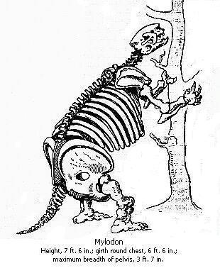 Mylodon tal como aparece dibujado en El viaje del Beagle. (DP)