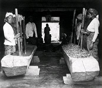 Trabajadores machacan hojas de coca en Java. Foto: Tropenmuseum (DP)
