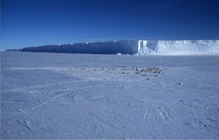 Foto-4-Pingûinera