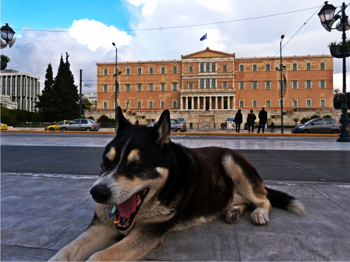 Perro Parlamento