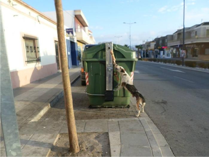Perro abandonado buscando comida en un contenedor en la carretera de Campohermoso a Níjar (enero 2013).