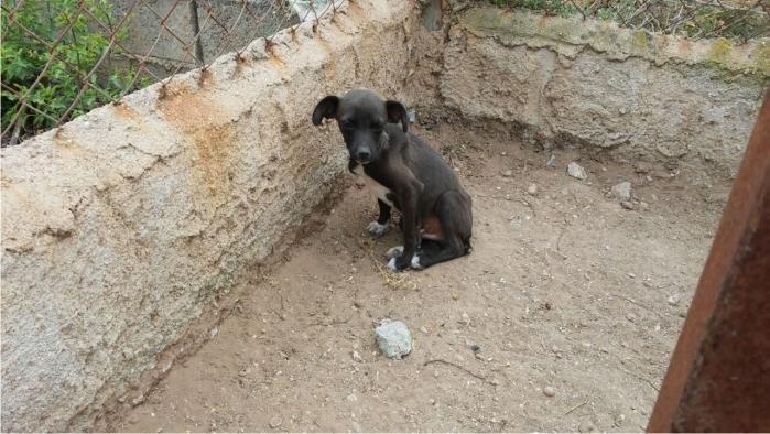 Cachorro de seis semanas abandonado en una huerta, aterrorizado y lleno de garrapatas y parásitos. Rescatado por Lucía en mayo de 2015.