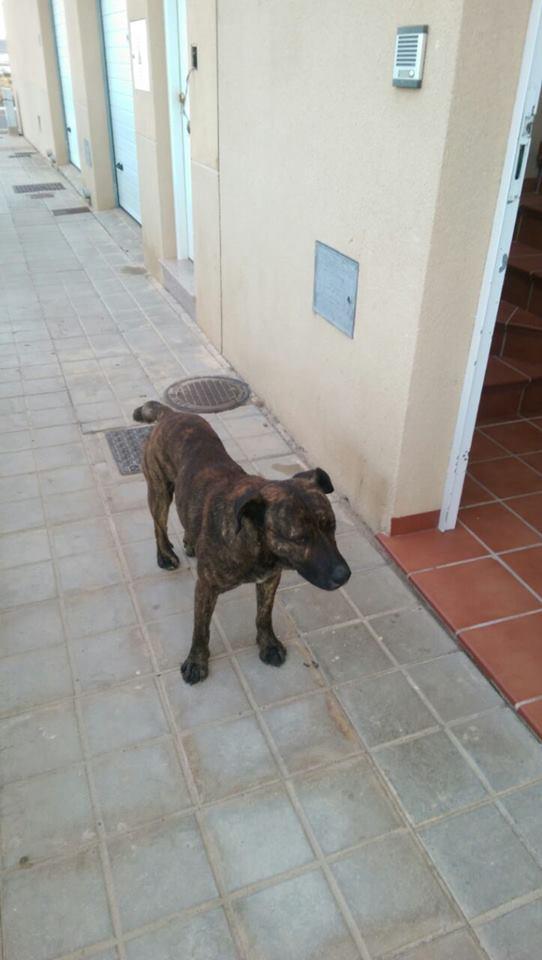 Perro abandonado callejeando por Campohermoso (mayo de 2015).