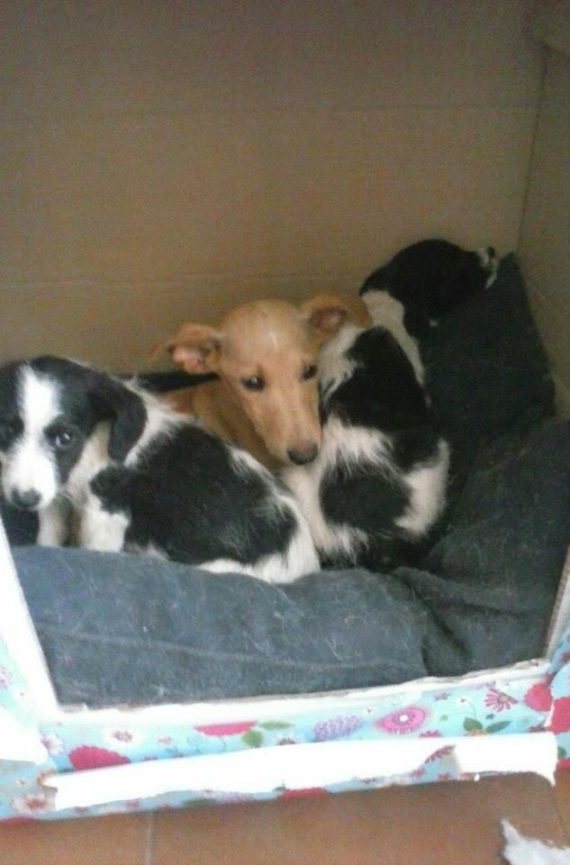 Cachorros abandonados dentro de una caja frente al domicilio de Lucía (abril 2015). Nunca se supo qué fue del resto de sus camadas.