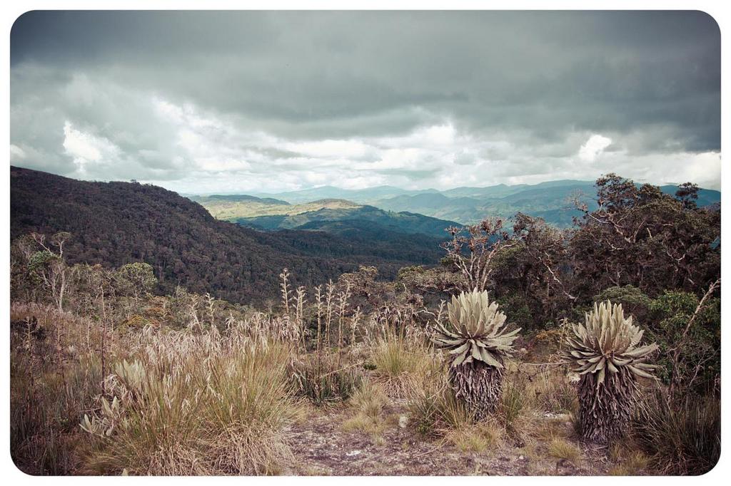 Páramo de Belmira, en Antioquia (Colombia). Fotografía: Alejandro Arango