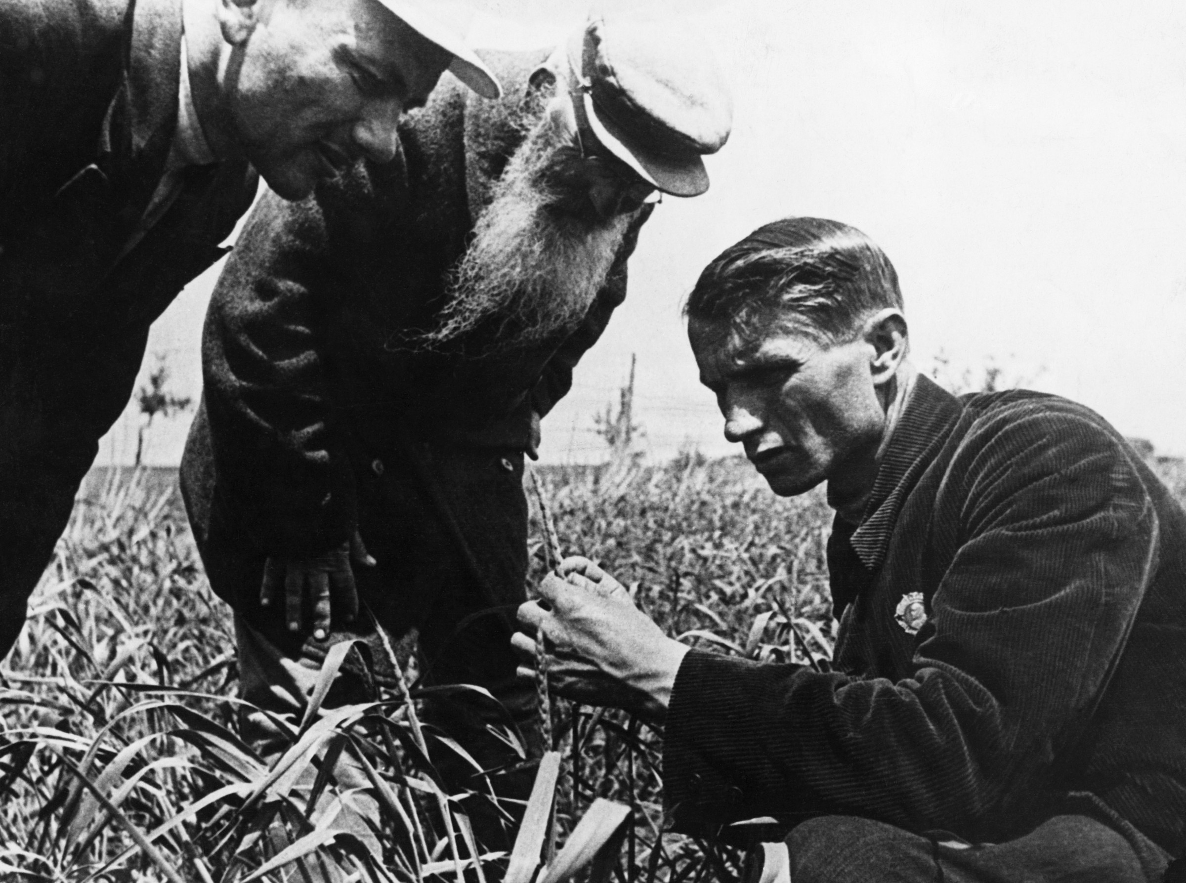 ca. 1934-1967 --- Soviet geneticist and agronomist, the President of the Lenin Academy of Agricultural Sciences, Trofim Lysenko measures the growth of wheat in a collective farm field near Odessa in the Ukraine. | Location: Odessa, USSR. --- Image by © Hulton-Deutsch Collection/CORBIS