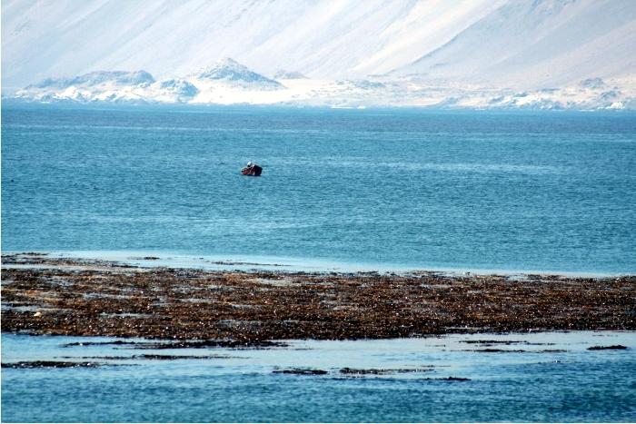 Las costas del norte Chile albergan uno de los desiertos más áridos del planeta (al fondo) y, a la vez, una de las productividades marinas mayores del planeta. Foto: Sergio Rossi.