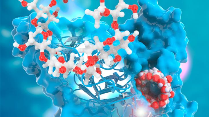 Simulación computacional en 3D de la enzima CGT-asa produciendo ciclodextrina. Imagen cortesía de 3Dciencia.com