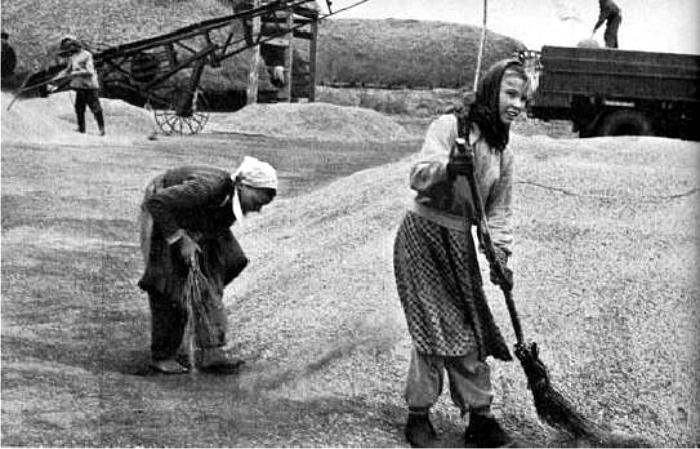 Trabajo colectivo en el koljós. Foto: DP.