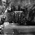 El llanto del macaco