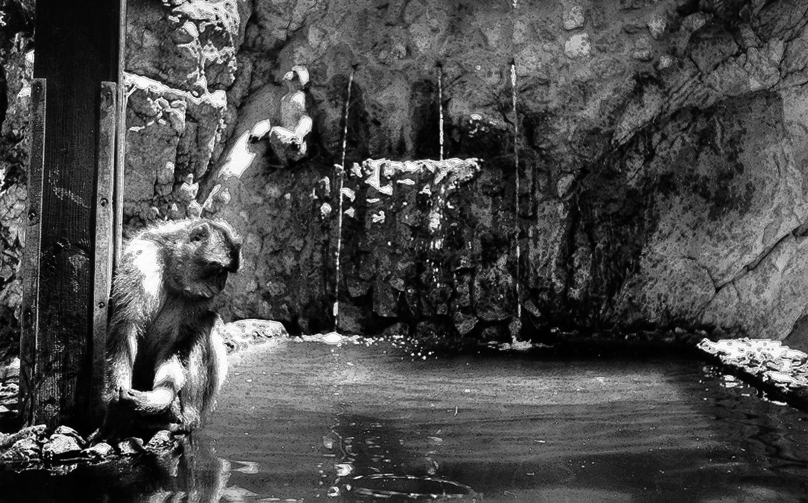 El llanto del Macaco 1