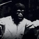 A los simios no les gusta la música