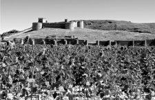 Días de verano en el páramo: castillos del Duero