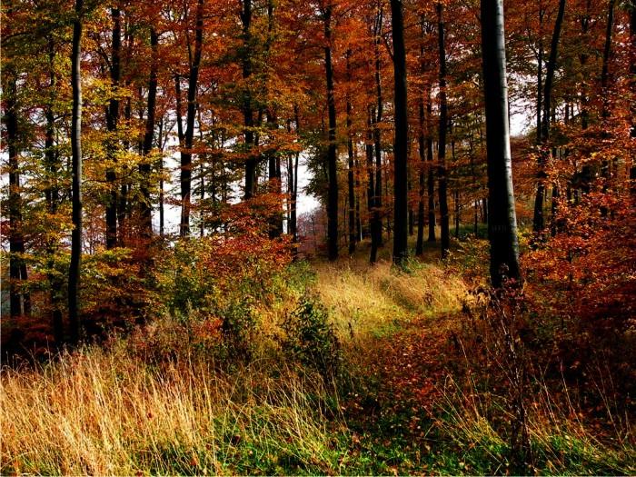 Bosque de Teutoburgo. Foto: Nikater (CC)