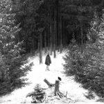 En las profundidades del bosque alemán