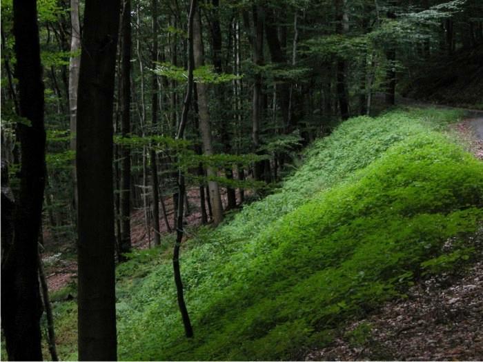 Bosque de St. Ingbert. Foto: Oliver Herold (CC)