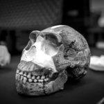 Puñaladas científicas en el camino de la evolución