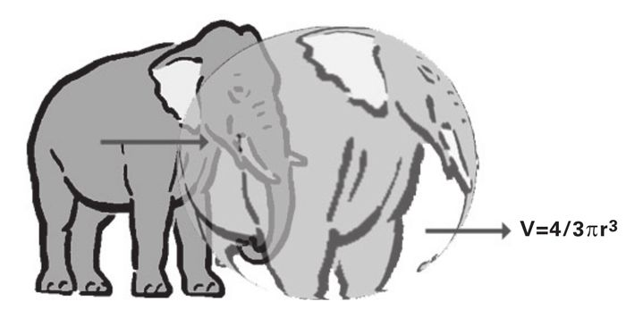 Fig. 2 Elefante esferico