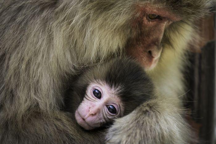01 Macacos Luca Fiorenza