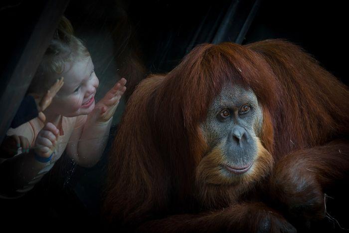 03 Orangutan Luca Fiorenza