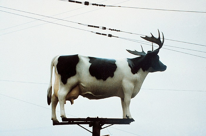 1024px Cow on pole with antlers