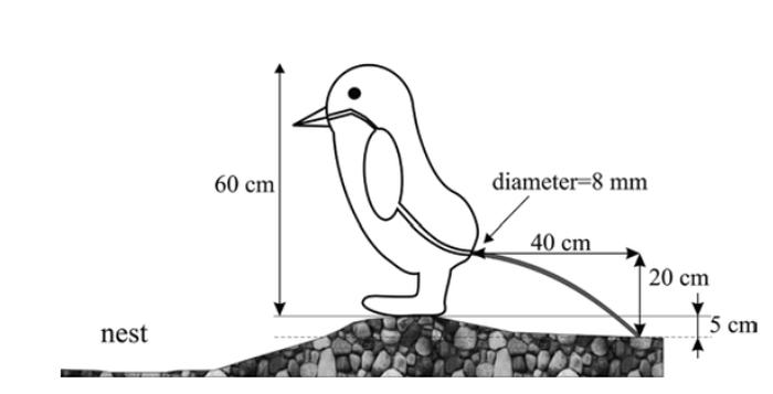 penguin result