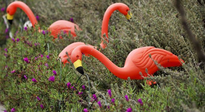 plastic flamingos result