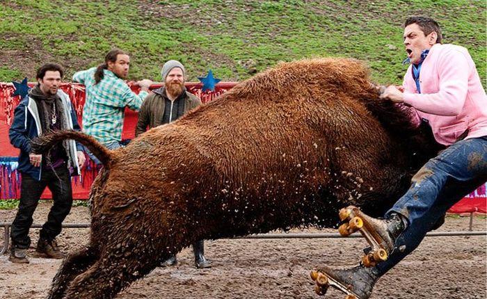 jackass 3d buffalo attack 14 9 10 kc result